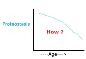 Proteostasis_Aging